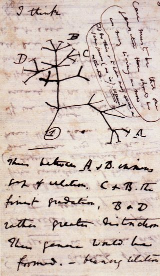 Tree of life transmitation charles darwin